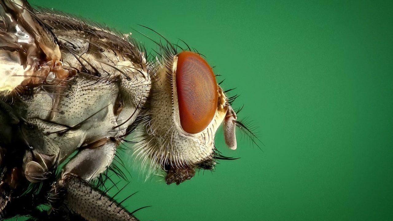 Comment Éloigner Les Mouches À L Extérieur chasser les mouches : comment s'y prendre ?