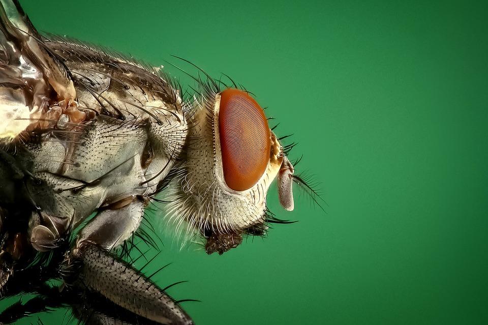 Chasser les mouches comment s 39 y prendre - Comment chasser les moucherons ...
