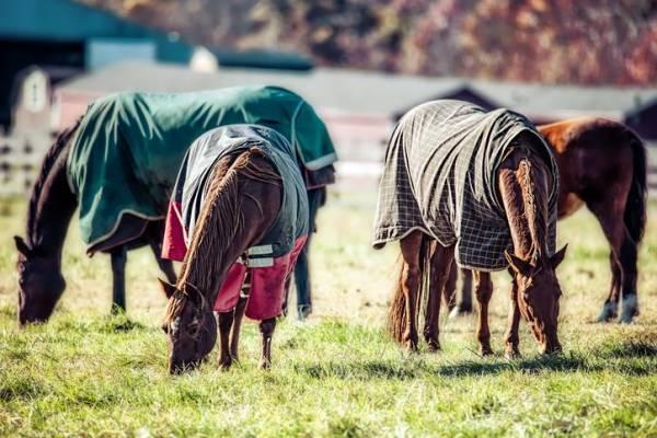 Couverture pour chevaux