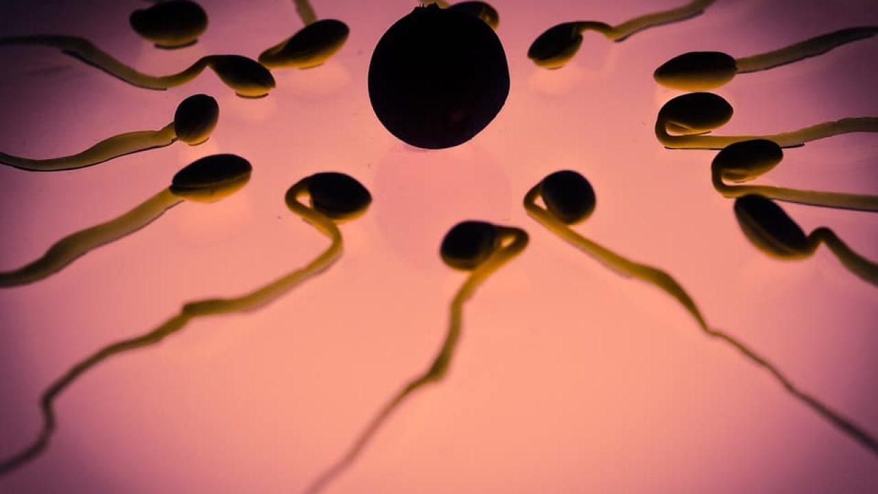 Comment Calculer Son Cycle Menstruel Pour Ne Pas Tomber