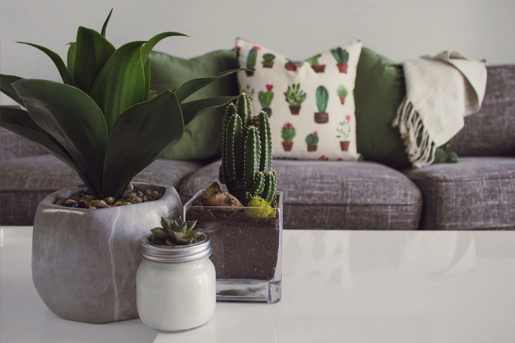 Les plantes d'intérieur : entretien et conseils