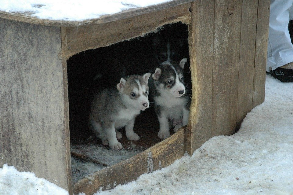 construire une niche pour chiots et chien