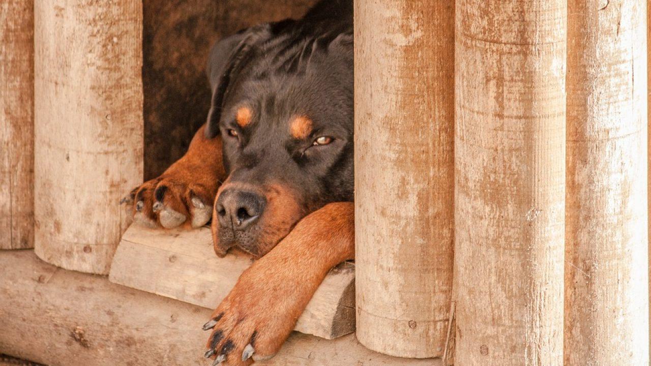 Lit Pour Chien Palette construire niche pour chien : guide avec tuto vidéo