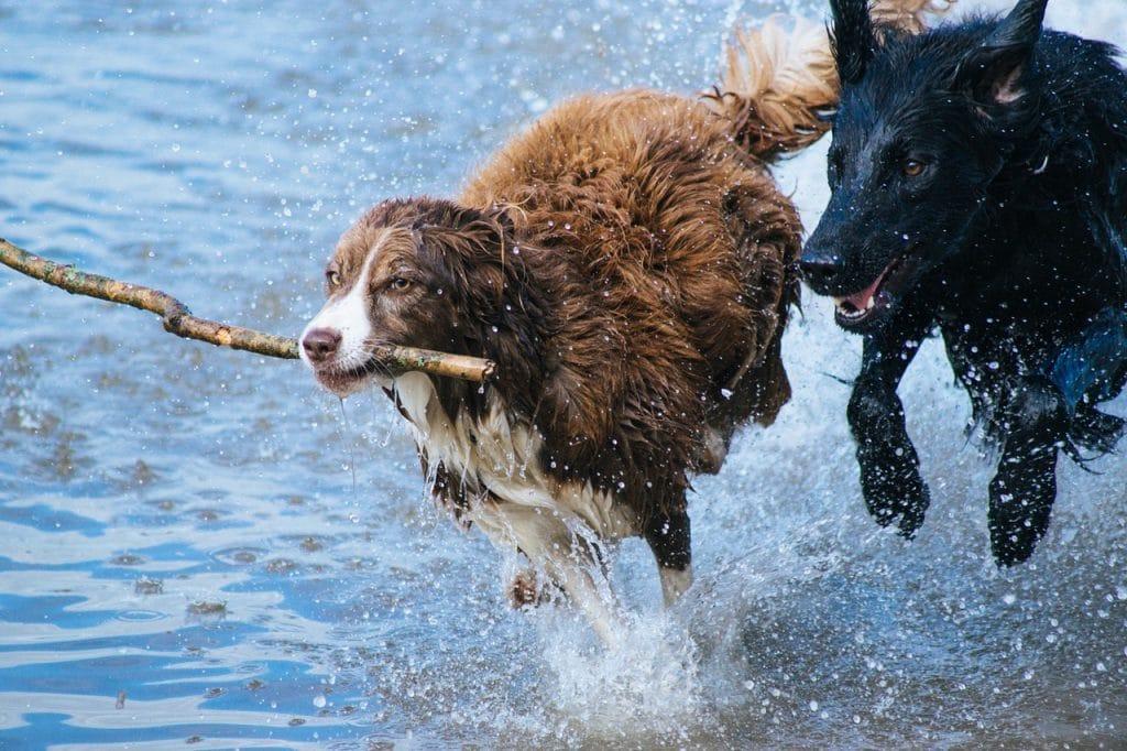 Les garanties offertes par l'assurance chien GMF