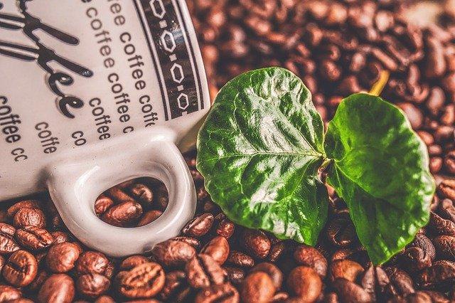 Qu'est-ce que le Green Coffee